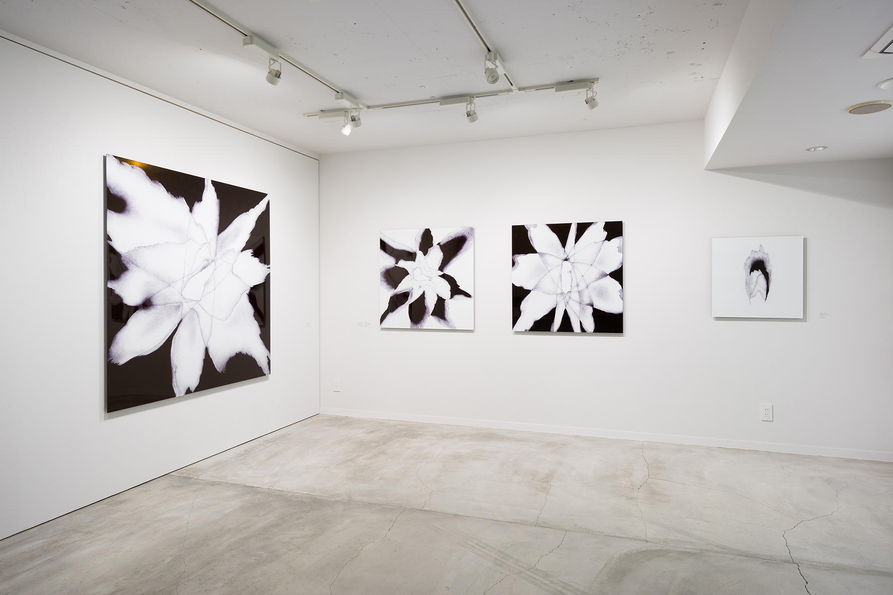 The installation view of solo show: Following the Shadow, in 2015